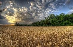 TasteofWillowsford_2012_field2_2X