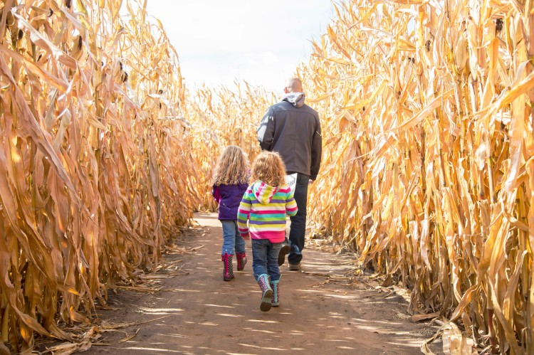 Two Girls & Dad Walking Through Autumn Corn Maze
