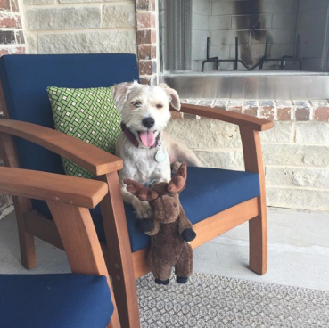 Dog in chair with fireplace