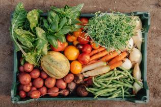 ELF_Farm Vegetables_preview